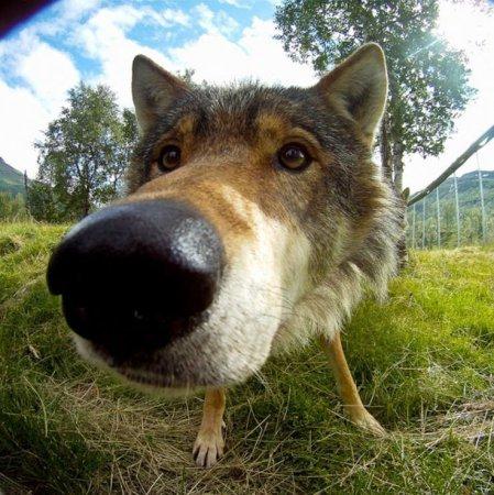 Любопытные носы пролезут везде: собаки, которым всё интересно