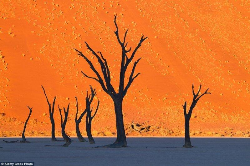 Этот снимок, сделанный в местечке под названием Деад Фляй (Dead Vlei) в Намибии, выглядит как картина. оптические иллюзии, природа