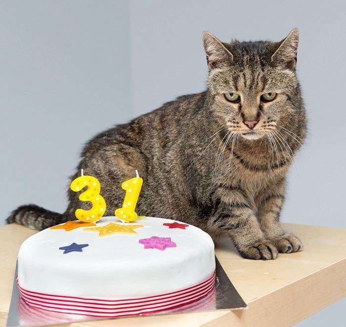 31-year-old-cat-nutmeg-11