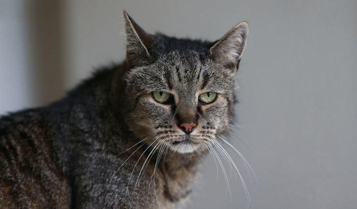 31-year-old-cat-nutmeg-2