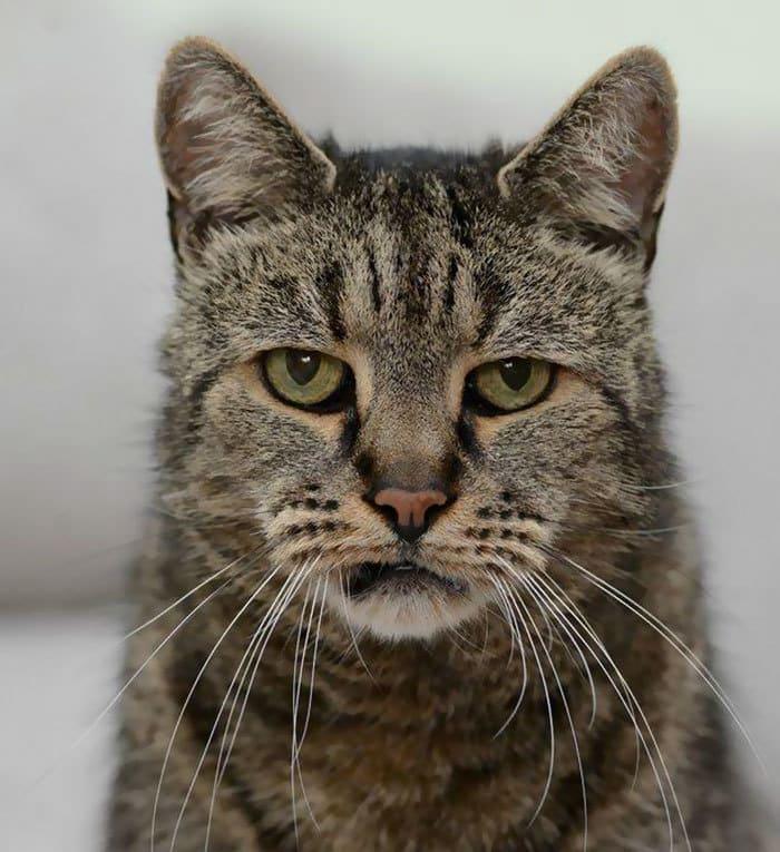 31-year-old-cat-nutmeg-7