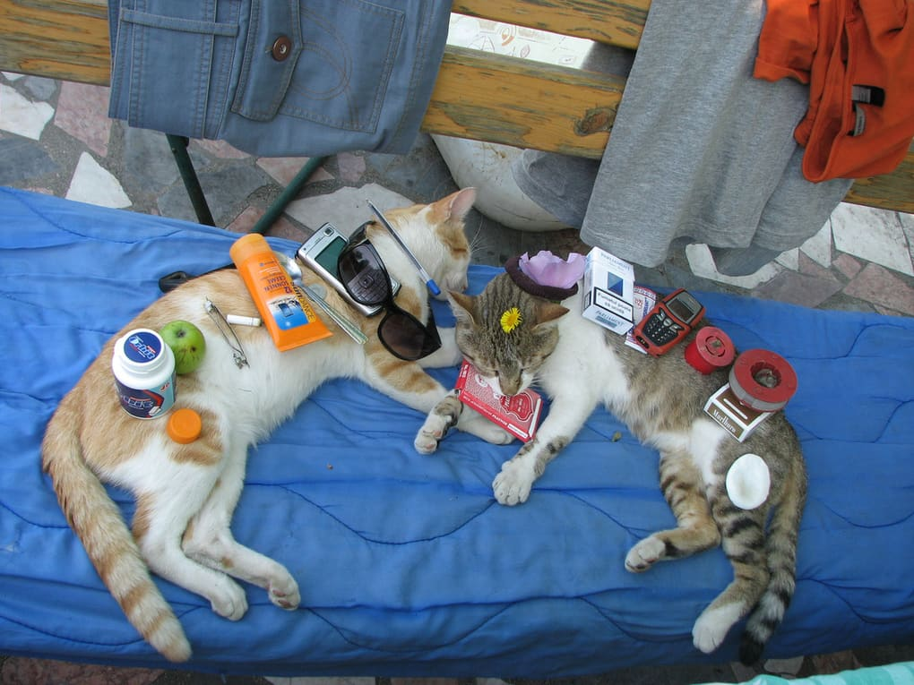 Image result for things on cats