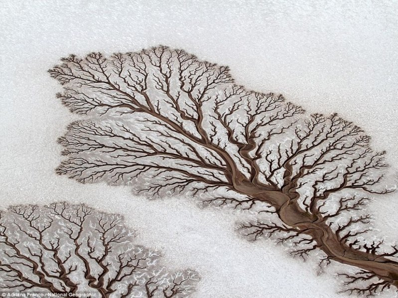 Похоже на мертвое дерево, лежащее на снегу. оптические иллюзии, природа
