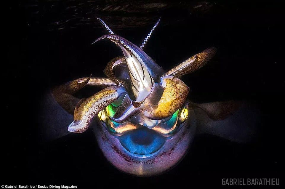 Gabriel Barathieu took this photo of a squid during a solo dive in the middle of the night in the Indian Ocean. He said he was swimming in a lagoon on Mayotte, a small French island near Madagascar, for only two minutes before he came face to face with the creature, which had a small fish between its tentacles. This photo won third place in the macro category