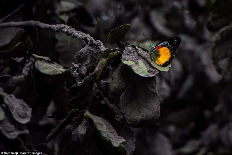 The warm orange colouring of a butterfly