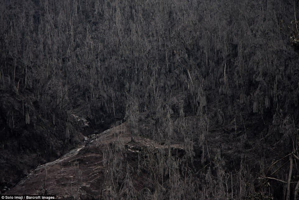 The once-dense forests of the mountain are now haunted by the dried embers of the volcano