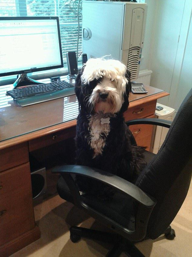 Chino is the Head of Paw-Blip Relations at DSI Communications in London. He can sometimes be cheeky and go for walkies on the desk