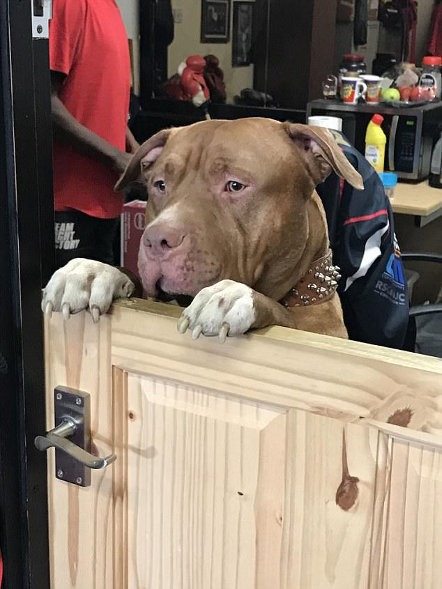 Meet tough-guy Eric who is the guard dog at Fight Factory Boxing Gym in London - he