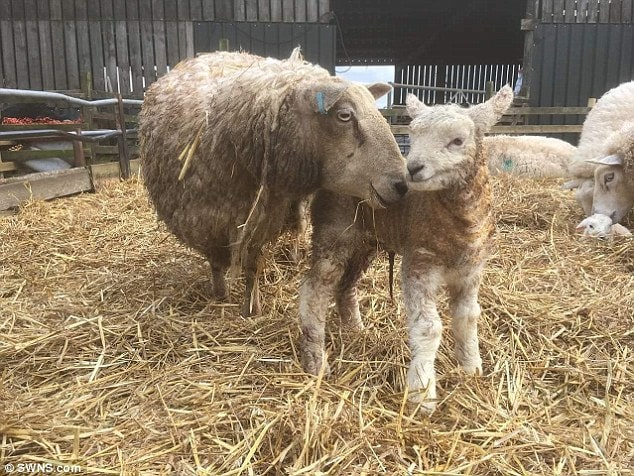 Billy stands next to his mum just an hour after she was born on March 9