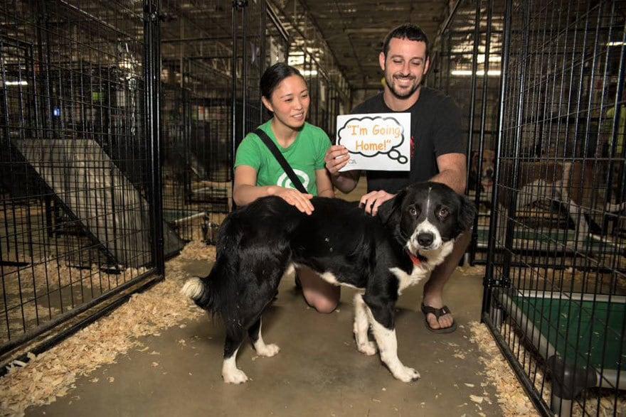 524-cats-dogs-adopted-adoption-event-aspca-17