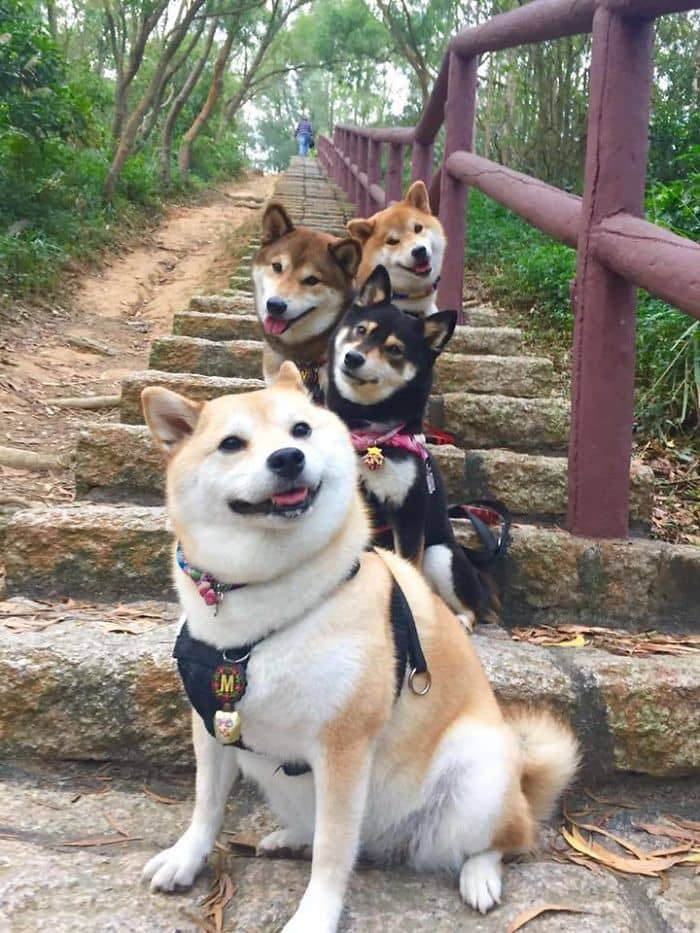 These Doges Are About To Drop The Most Fire Album Of 2017