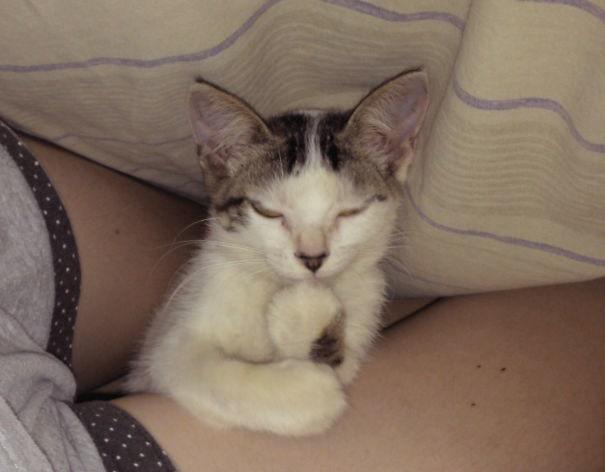 Caught My Cat Plotting Something Evil Under The Blanket