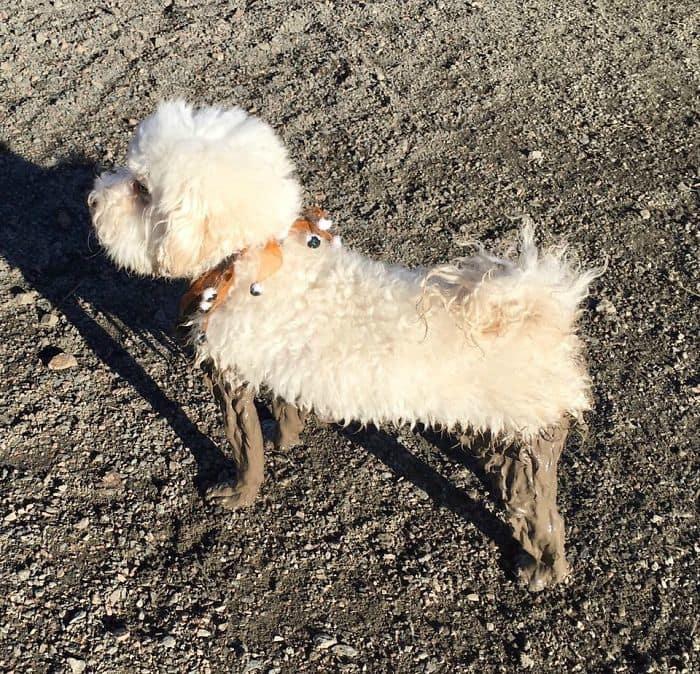 Doggie Slipper