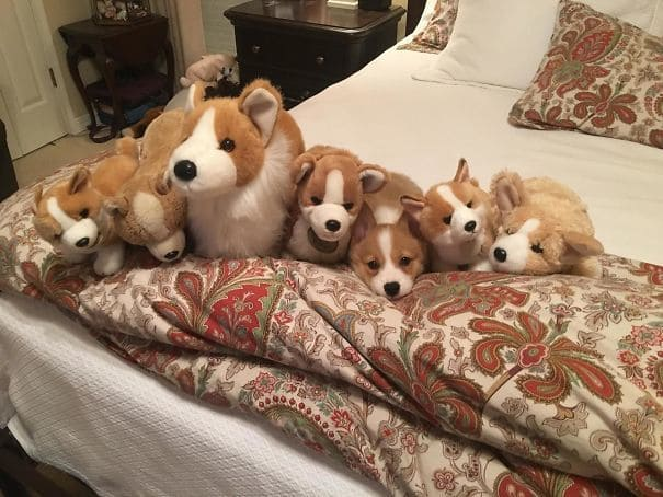 Spot The Imposter