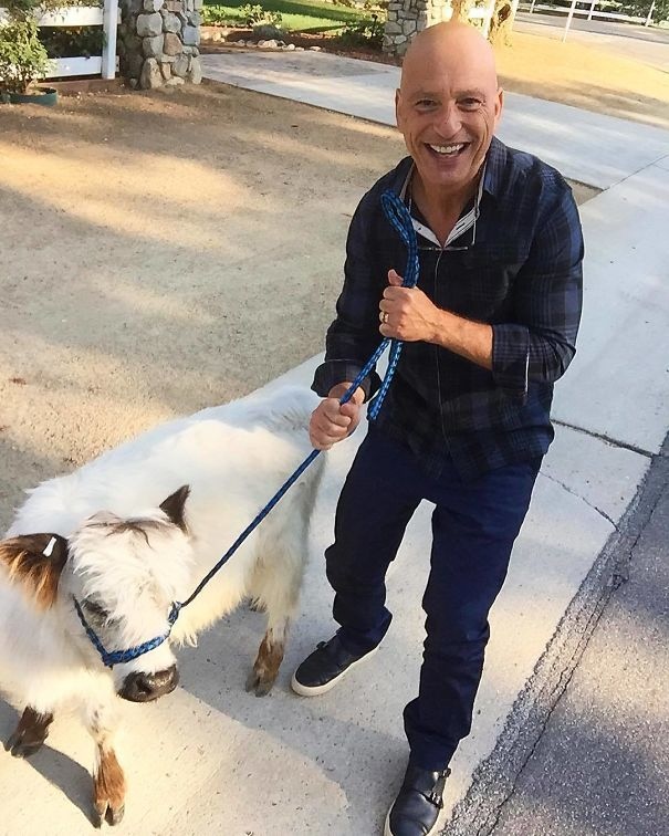So I Was Out Walking My Mini Cow When Howie Mandel Stopped For A Picture