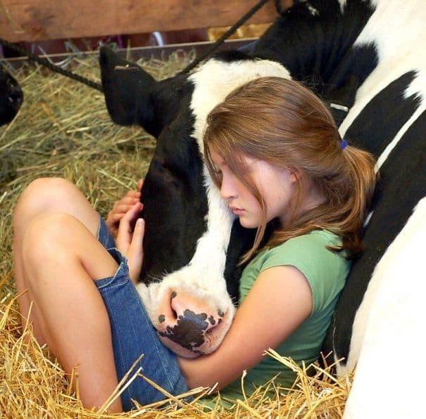 Cows Also Deserve Kindness