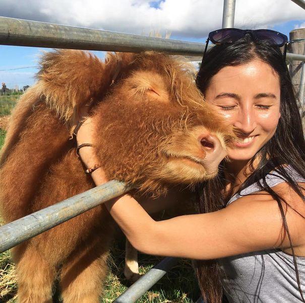 Cows Make Great Companions