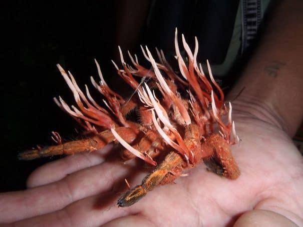 Паукообразные не безопасны от грибков кордицепса Либо