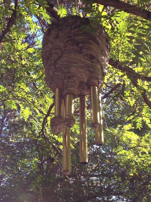 Улей, построенный вокруг курантов ветра в доме моего друга