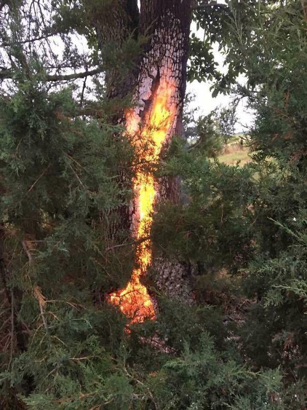 Это дерево в Небраске было поражено молнией и горит после дня спустя