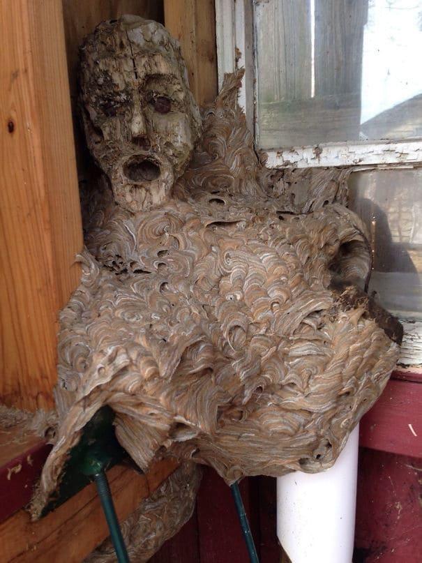 Заброшенное гнездо шершней Мой папа нашел в своем сарае, что он не был в течение пары лет. Глава представляет собой деревянную статую, с которой