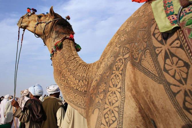 Верближий боди-арт