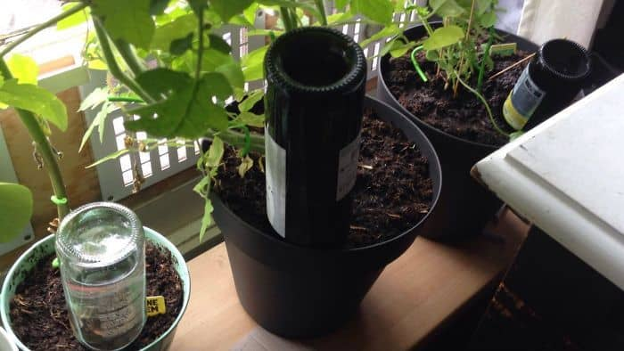 Keeping The Plants Alive While We Are Away. The Water Lasts For Five Days In Some