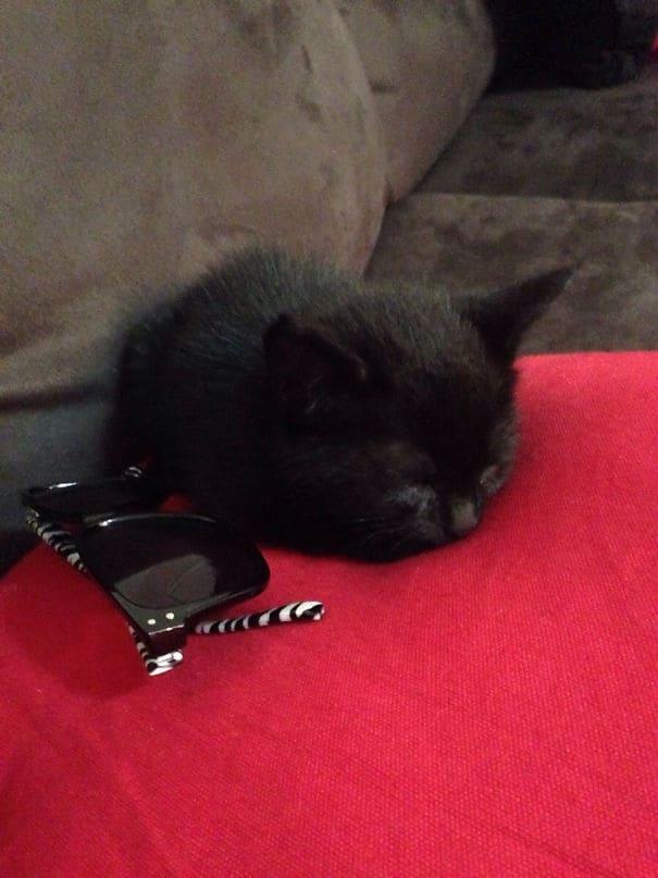 До тех пор, пока я помню, я хотел котенка. Пришел домой из работы, чтобы найти этого маленького парня в моей гостиной. У меня есть лучший друг