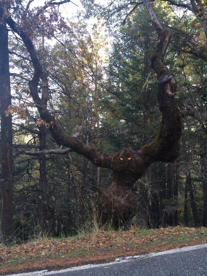 Кто бы ни положил эти глаза в дерево: F *** Ты!