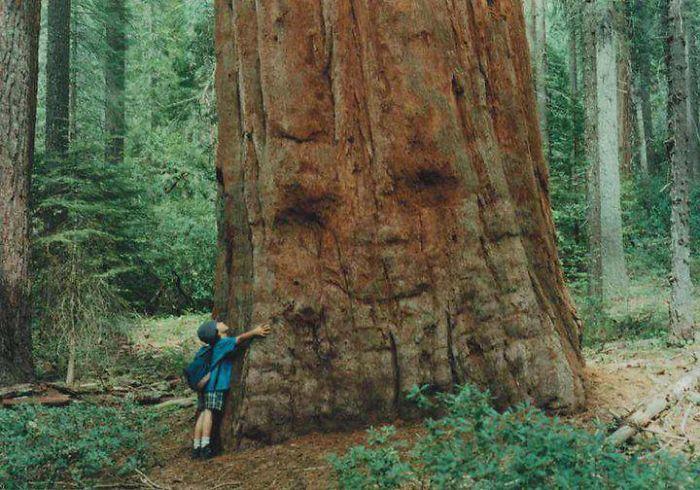 Г-н Big Ass Tree приветствует большой поцелуй ребенка