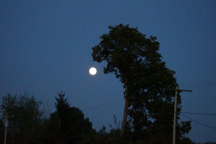 Дерево Годзилла ест луну! Om Nom Nom Nom!