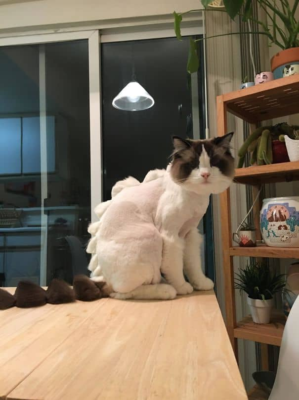 This Is What Happens When You Let Your Boyfriend Take The Cat To The Groomer