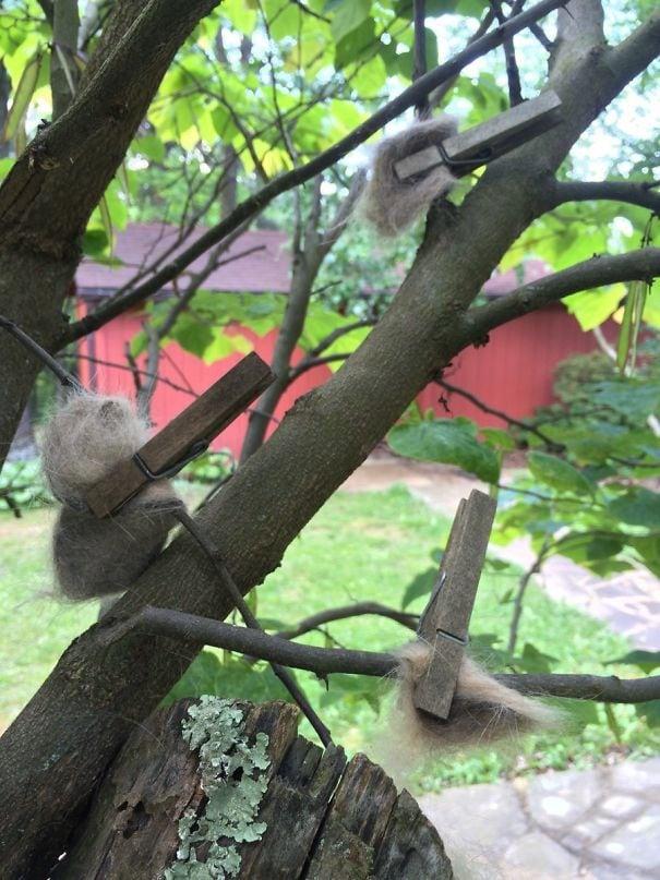 Моя бабушка шпильки кошачьих волос к деревьям, поэтому птицы могут создавать роскошные гнезда. Так проклятый Задумчивый