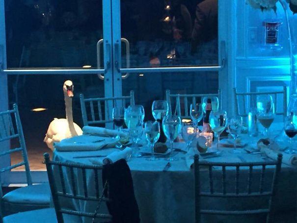 Мой приятель отправился на свадьбу в прошлые выходные, и этот лебедь не переставал смотреть на него сквозь дверь