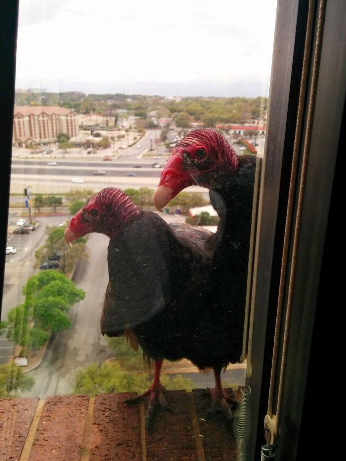 Я использовал для работы в 10-этажном здании, и это были мои ежедневные посетители