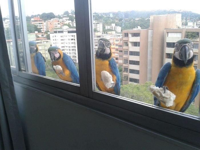 У меня есть 4 пернатых друга, которые приходят к моему окну Каждое утро для завтрака