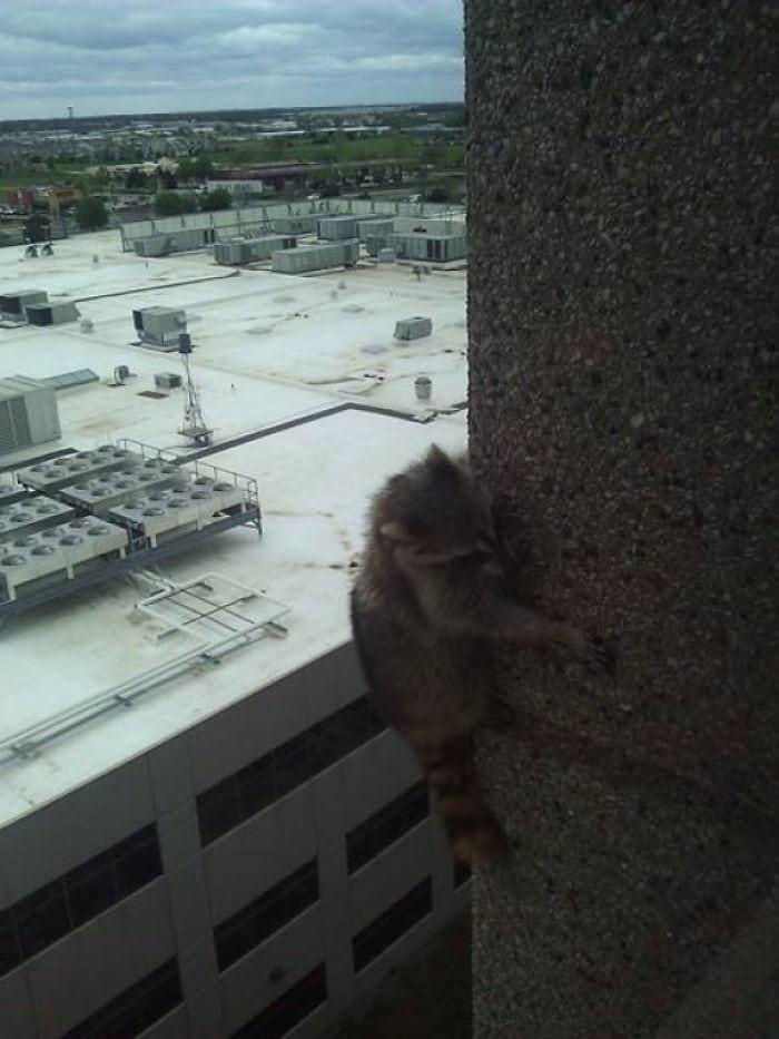 Я вижу ваших птиц с высоким подъемом! Я подниму тебя высокорожденным ракуном!