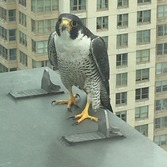 У меня также есть друг на 31-м этаже