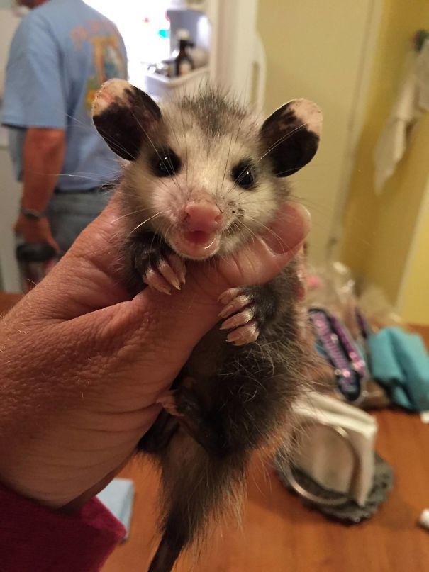 Моя мама волонтеров для спасения животных. Она отправила меня это