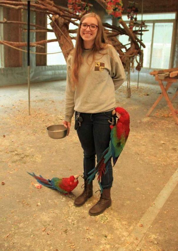 Я волонтер в святилище попугаев, и все птицы думают о нас, как человеческие тренажеры для джунглей