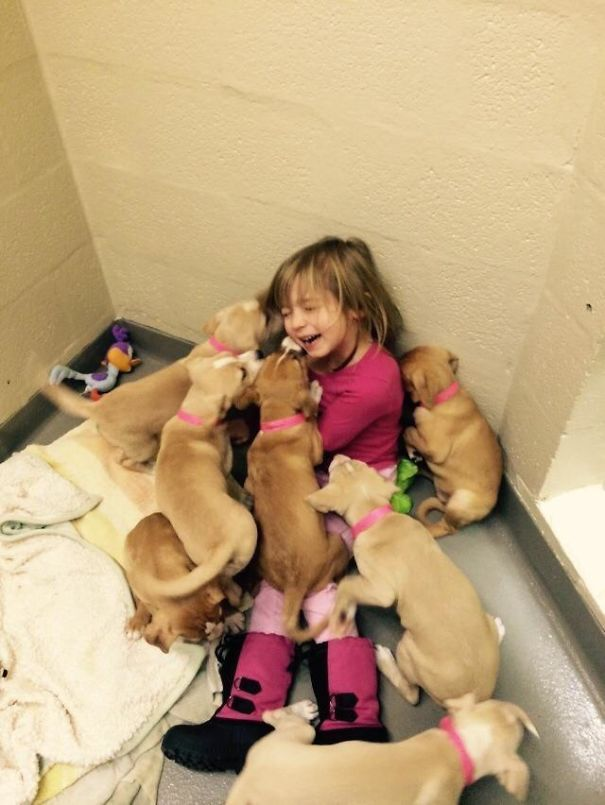 My Daughter Volunteering At Our Local Shelter, Helping Feed The Puppies. She Was Taken Down And Overpowered By Adorableness