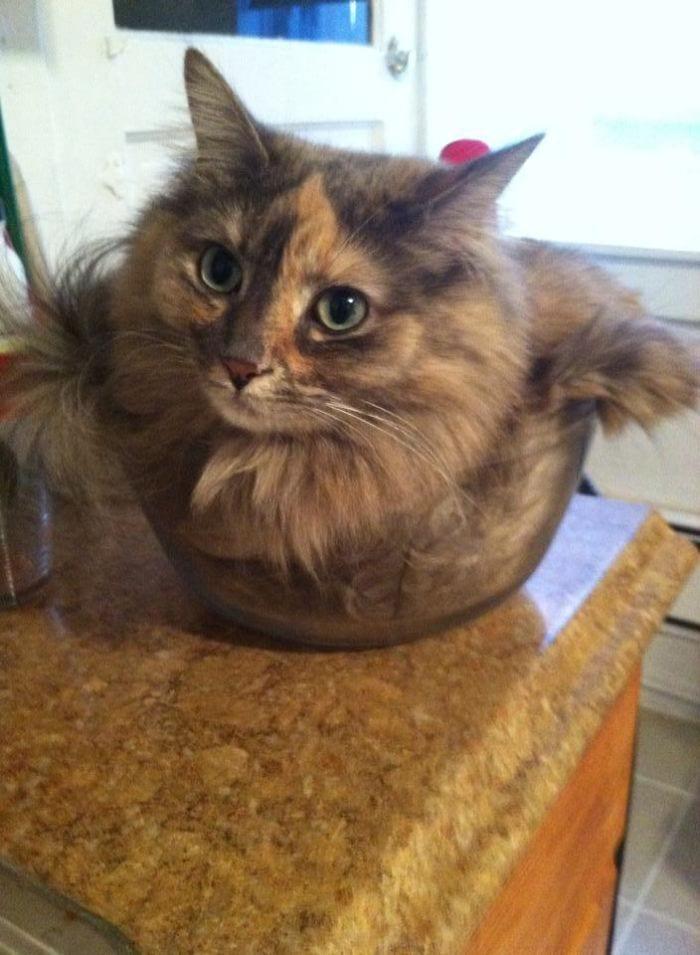 Твердый, жидкий, газовый кот