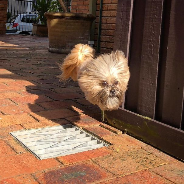 Когда собака моего друга прыгает через ребра, ее тело и ноги исчезают, и это выглядит так, как голова собаки просто плавает вниз по улице