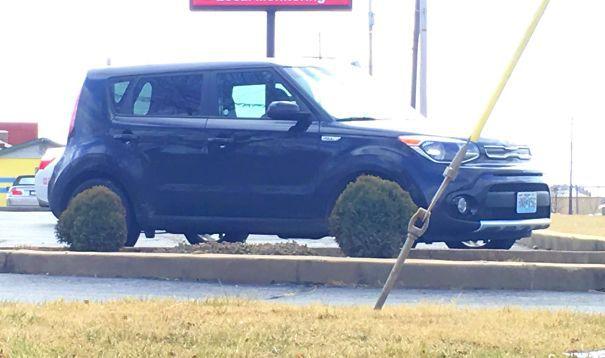 Возвращаясь к машине и заметив, что кусты идеально расположены, чтобы выглядеть как мои шины. Я немного смутился за мгновение