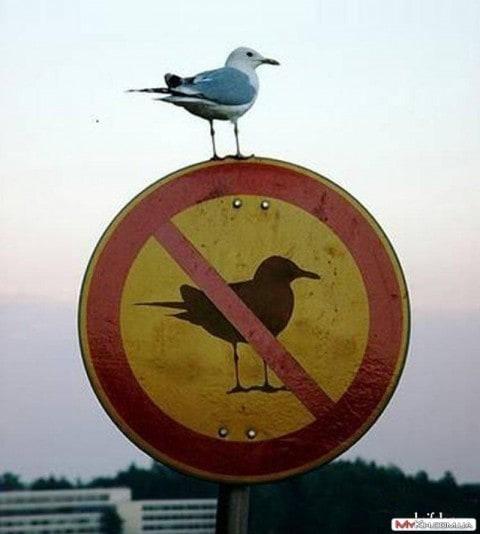 Бунтари против системы прикол, фото, юмор