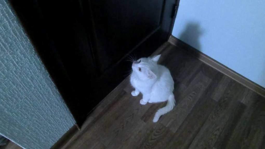 Image result for кот хочет выйти