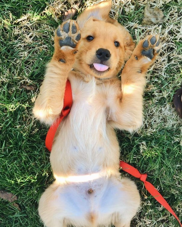 Paws In The Air Like I Just Don