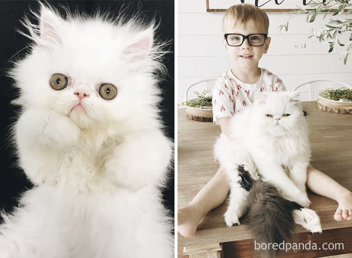 Harrison From Harrison And Humphrey Then And Meow