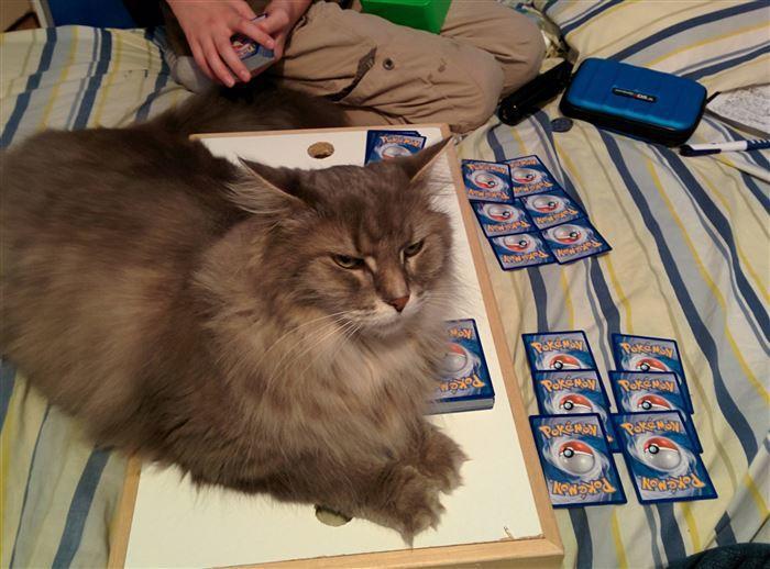My Jerk Cat разрушил мою игру в покемоне, когда я запустил свою самую сильную карту