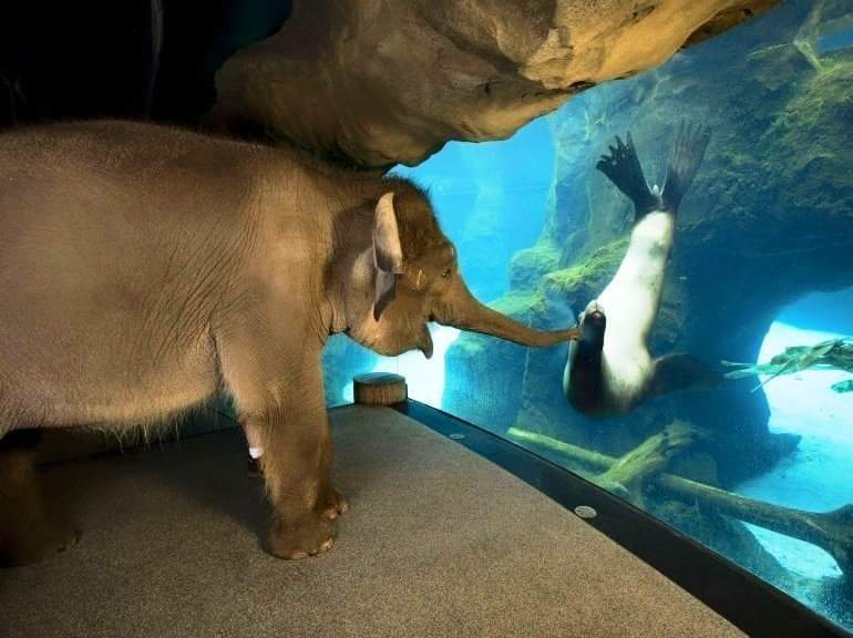"""The Oregon Zoo staff took the elephant around the zoo, she liked sea lions the best!"""